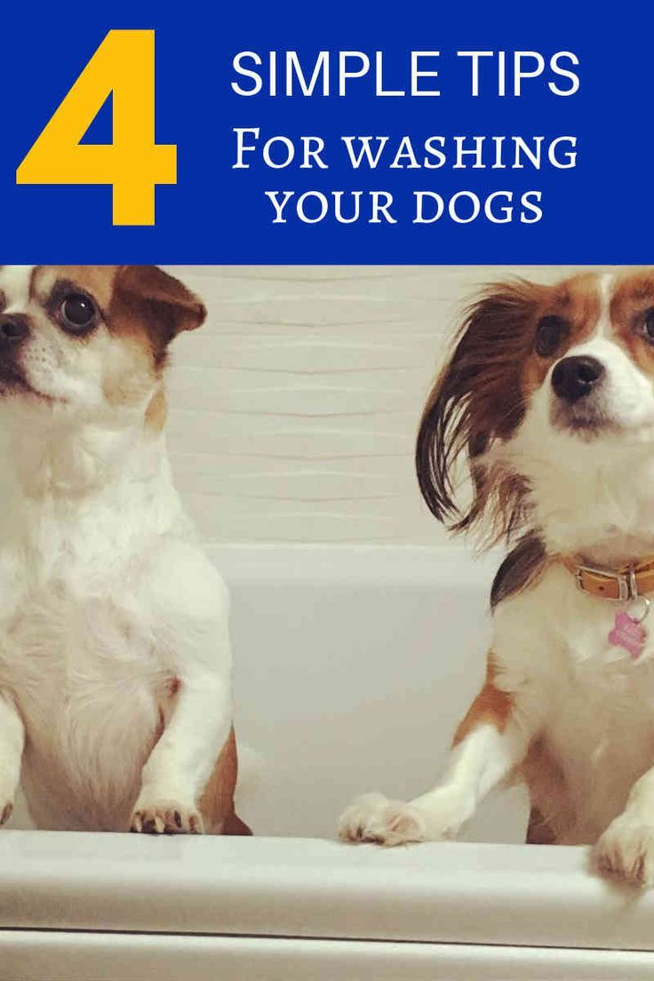 Dog Grooming Supplies to Reduce Home Cleaning Pet