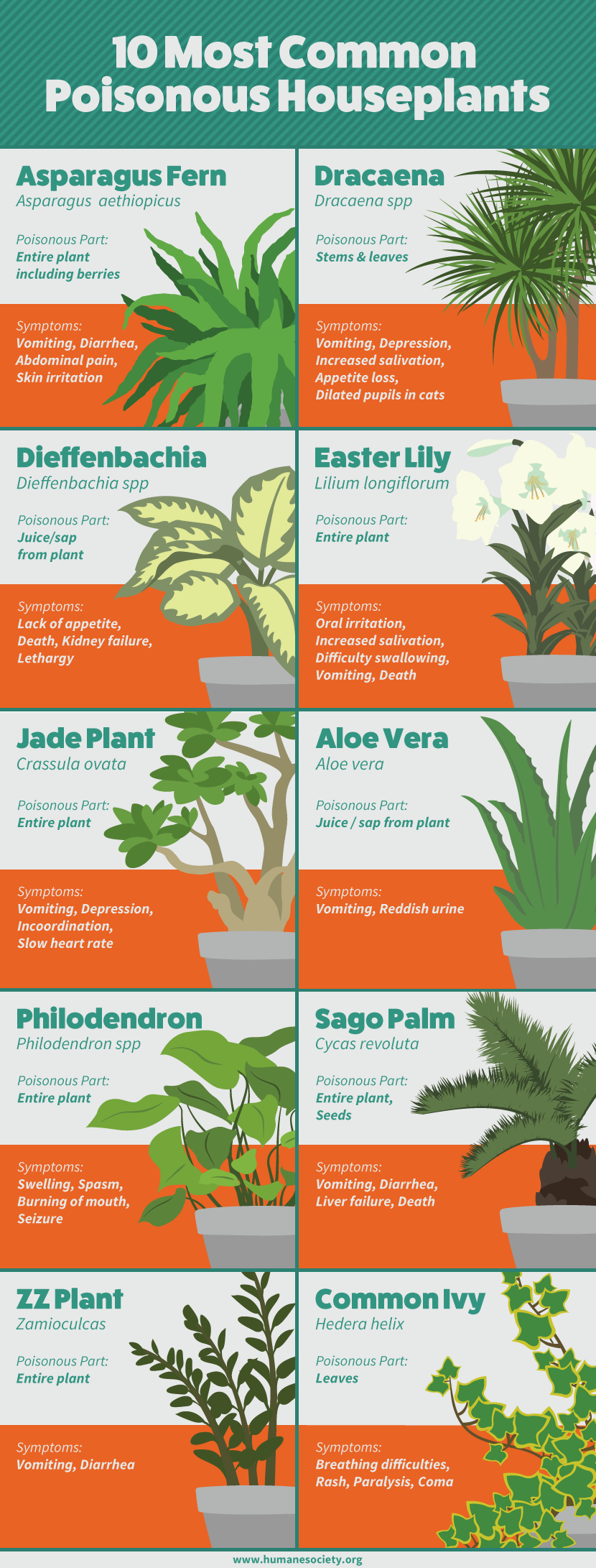A Guide To Dangerous Houseplants For Pets Keep Your Dogs And Cats Safe By Avoiding Contact With These Popular D Plants Poisonous House Plants Poisonous Plants