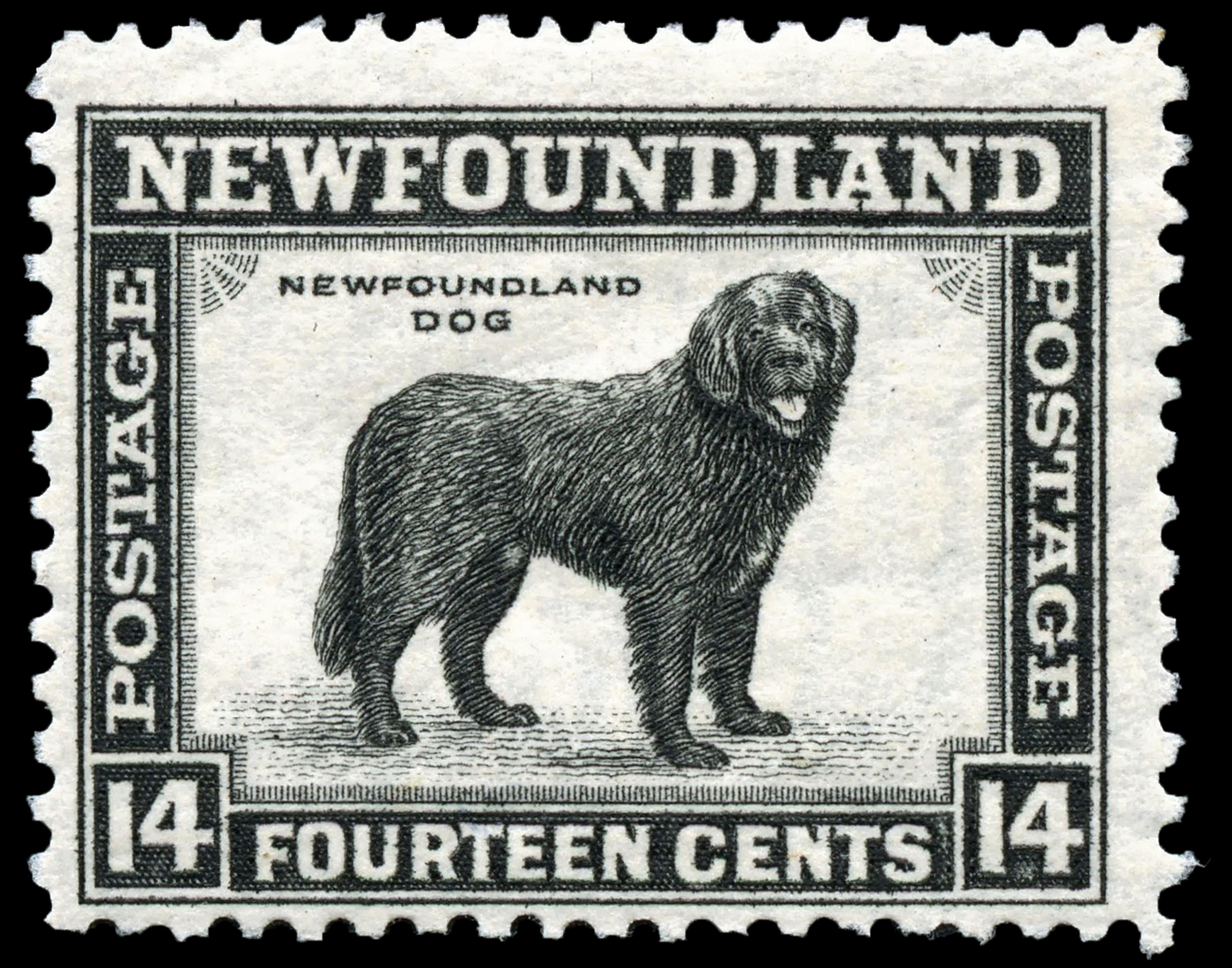 Canvas Print Vintage Newfoundland Stamp 11 X 14 Newfoundland Dog Newfoundland Dog Newfoundland Black Dog