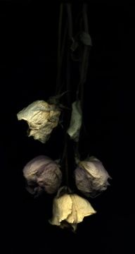 i love how you kept dried out roses as decoration