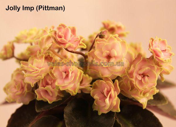 Jolly Imp (Pittman)