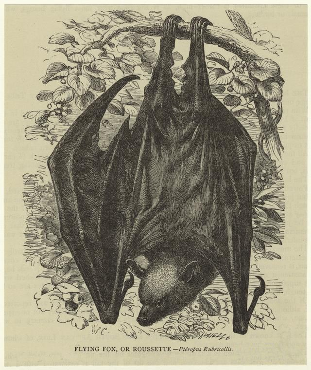 bat art hanging bat print Bat Print Halloween art