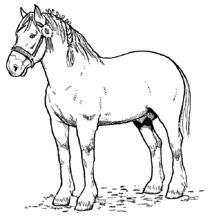Online Coloring Book Horse Coloring Pages Horse Coloring Animal Coloring Pages