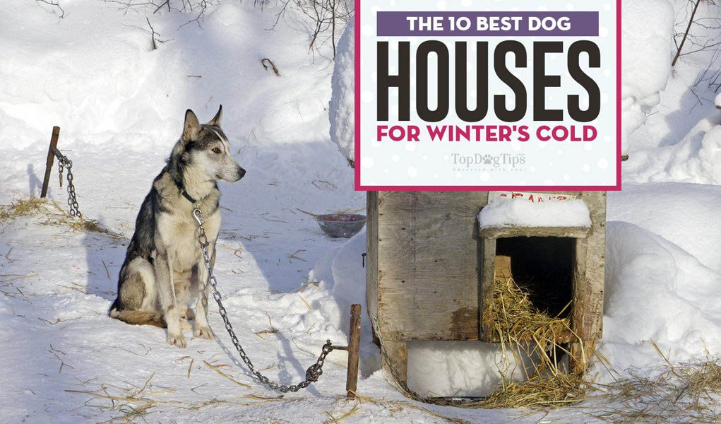 The 10 Best Insulated Dog Houses For Winter Insulated Dog House