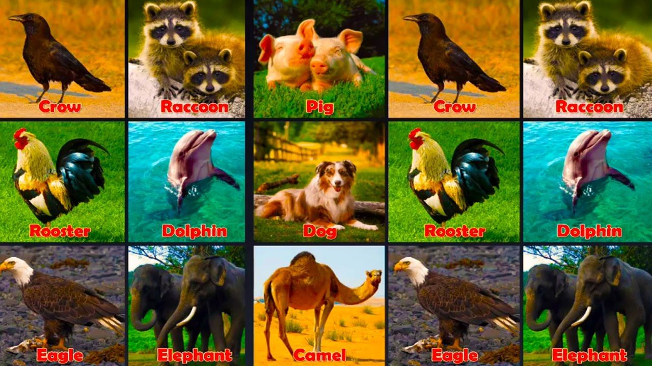 Learning Animals Sounds For Children Learn Animals Names For Kids And Toddlers Learn Wild Animals Animals Wild Animal Sounds Toddler Learning