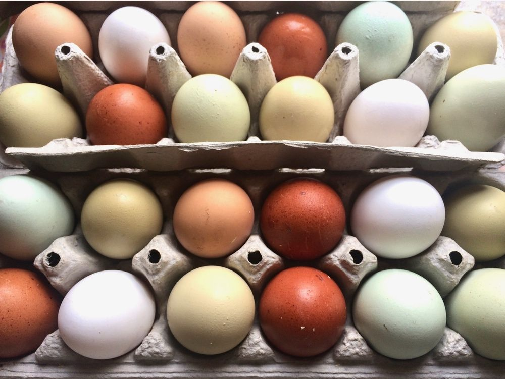 Colored Eggs From Chickens