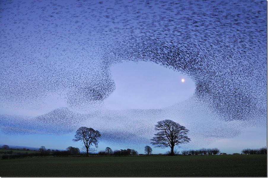 Starling murmuration near Edinburgh