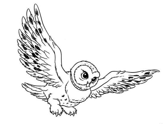 flying owl | Owl coloring pages, Online coloring pages ...