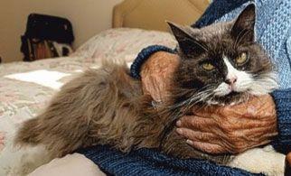 En Angleterre, un chat autorisé à rester en maison de retraite !