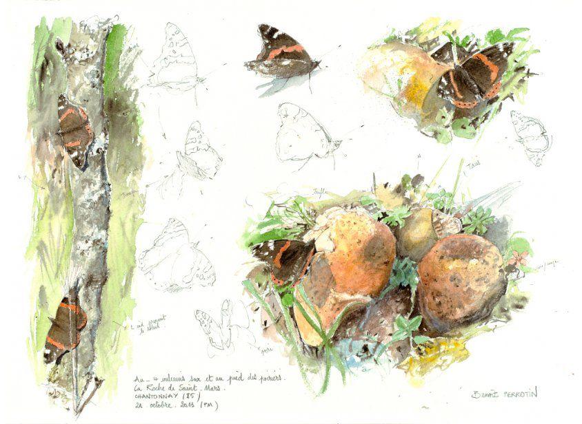 Benoit Perrotin Illustrateur Naturaliste Galerie