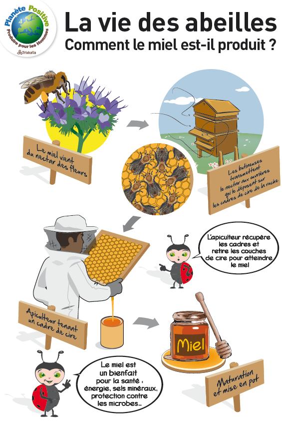 production de miel abeille