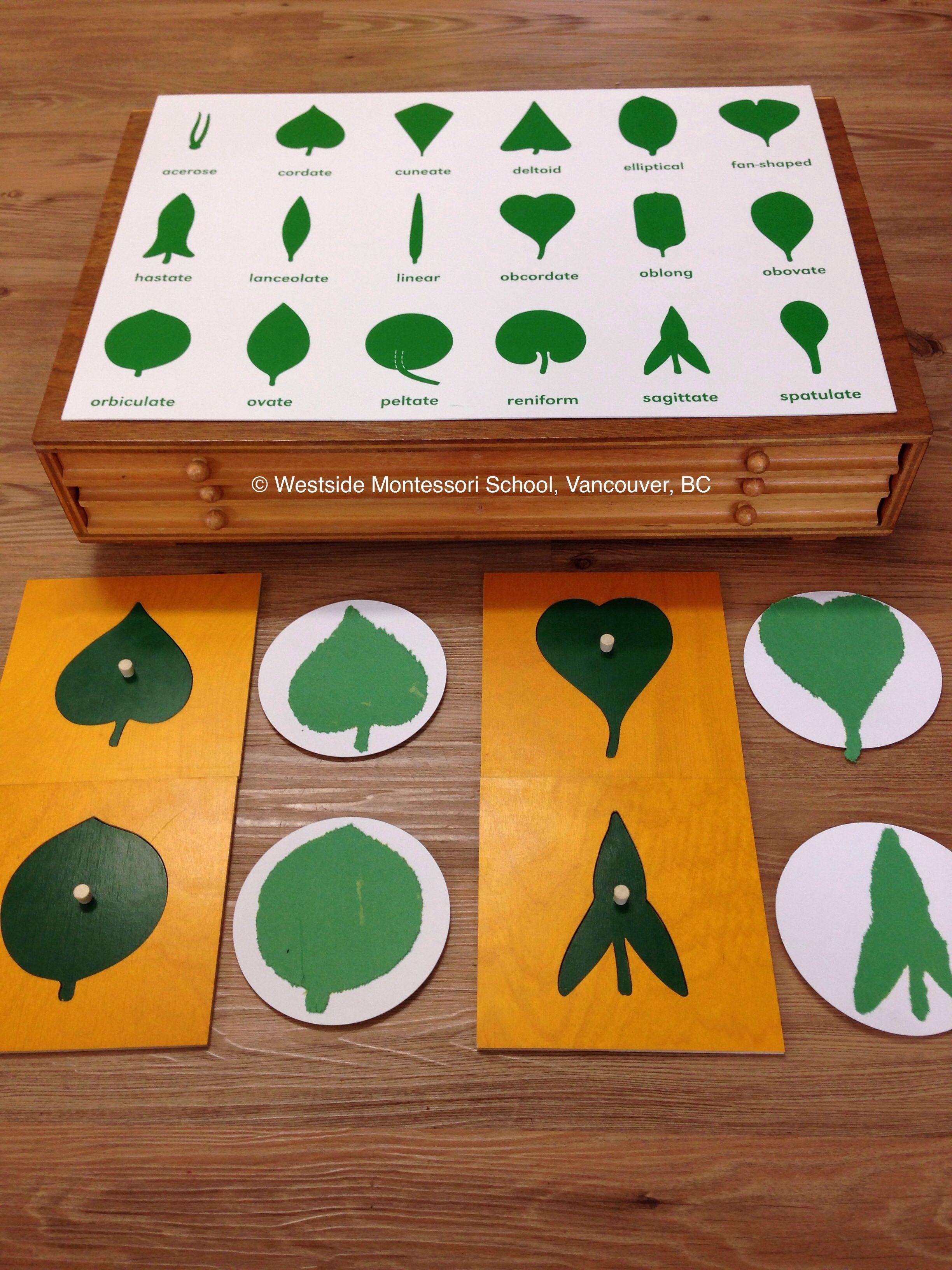 Leaf cabinet