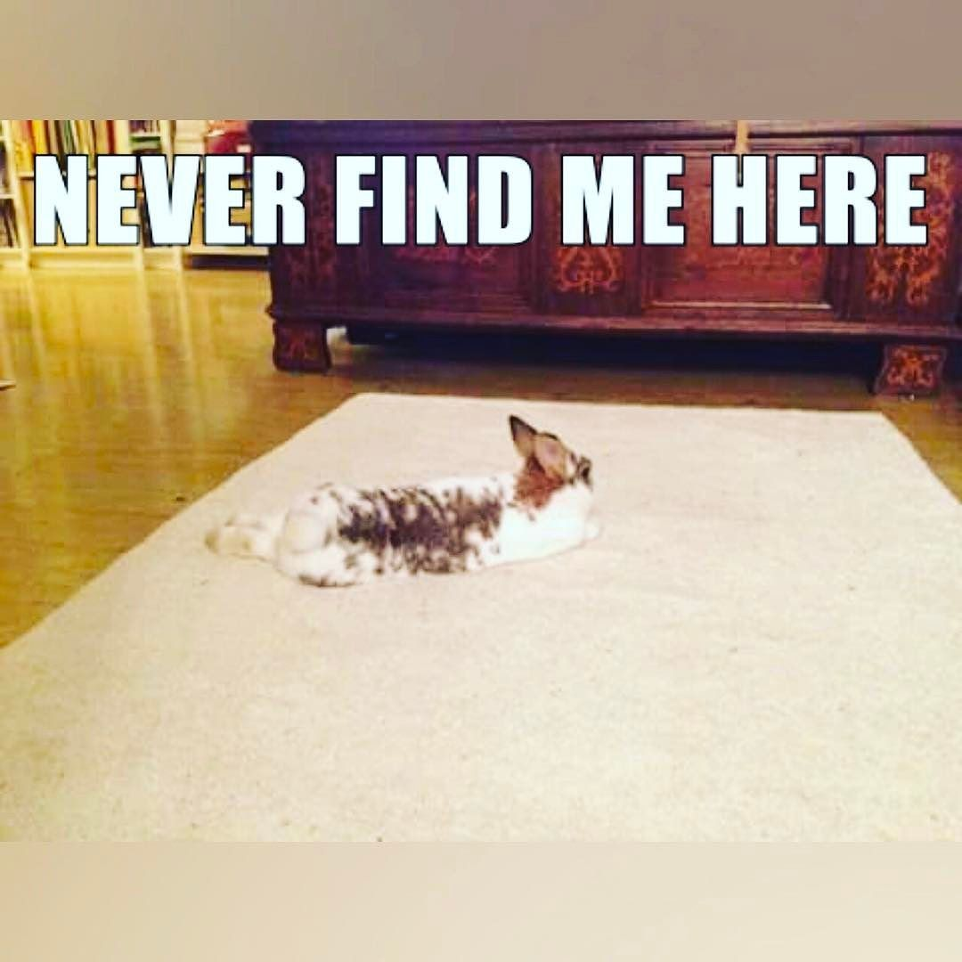 Never ever! #rabbit #rabbits #bunnies #bunny #CuteAnimals #pet #pets