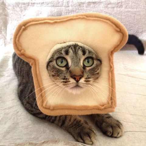 14 Amazing Costumes for Cats That'll Blow Up Your Instagram | Cat ...