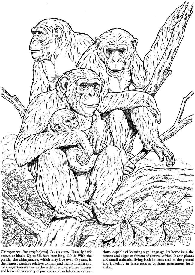 welcome to dover publications monkeys and apes coloring book - Coloring Pages Monkeys Trees