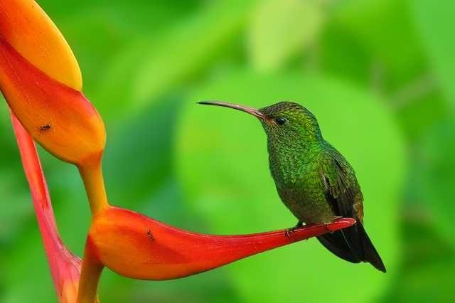 Most Beautiful Birds Of The World Most Beautiful Birds Hummingbird Wallpaper Bird Photography Beautiful birds hd wallpaper free