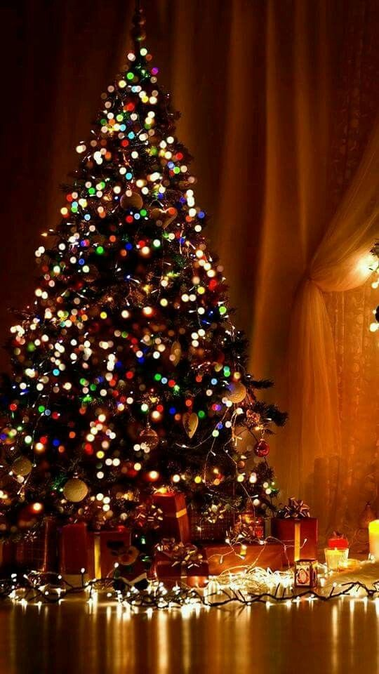 Christmas Tree With Colorful Lights Christmas Trees
