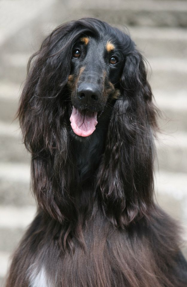 The Subtle Side Part 26 Important Hairstyles You Need To Try Right Now Afghan Hound Dog Names Long Haired Dogs