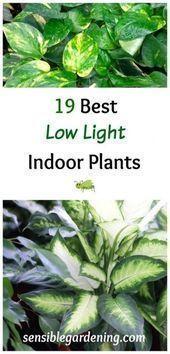 #shade #Ideas #indoor #interior lighting #new#ideas #indoor#ideas  #shade #Ideas #indoor #interior lighting #new#ideas #indoor#ideas   #ideas #indoor #indoorideas #interior #lighting #newideas #shade
