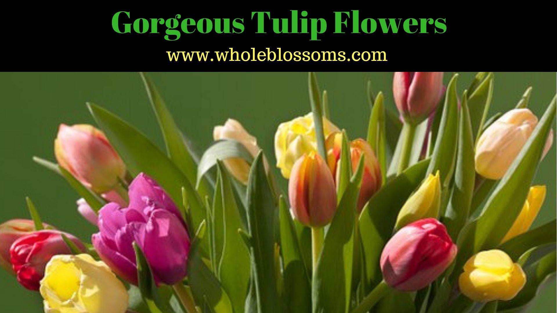 Bulk Orange Tulip Flower At Wholesale Prices Tulips Flowers Orange Tulips Tulips