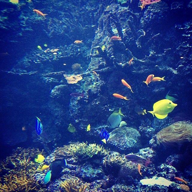 Georgia Aquarium Oh The Places We Go Pinterest