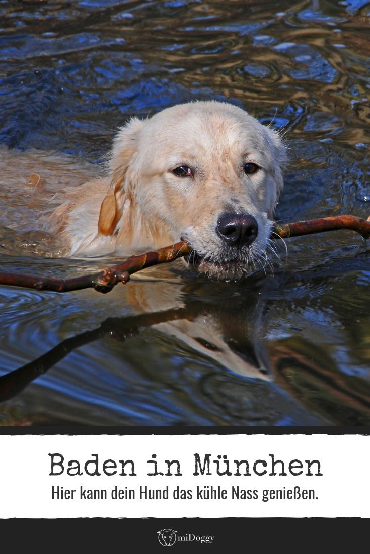 Am Hundesee bei München Hunde, Gesunde hunde und Hund