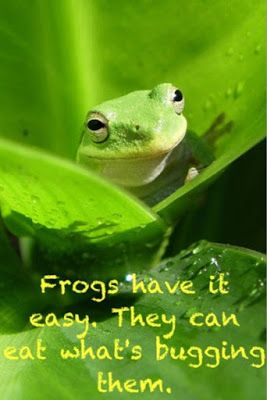 F R O G Fully Rely On God Box Frog Frog Theme Missionary