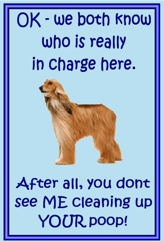 Gifts For Dog Owners Afghan Hound Fridge Magnet Various Designs