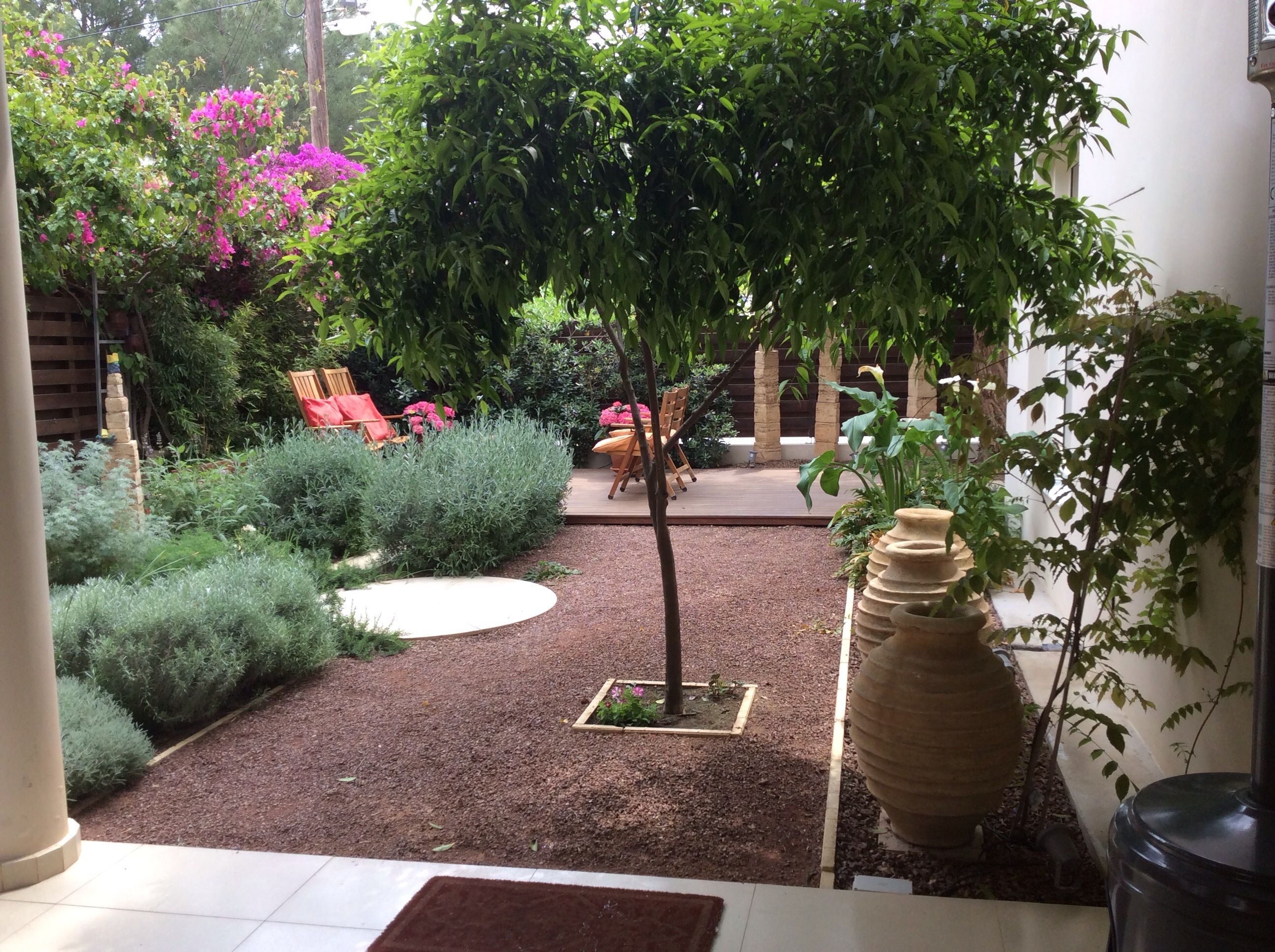 My Mediterranean gardens.Cyprus (With images ...