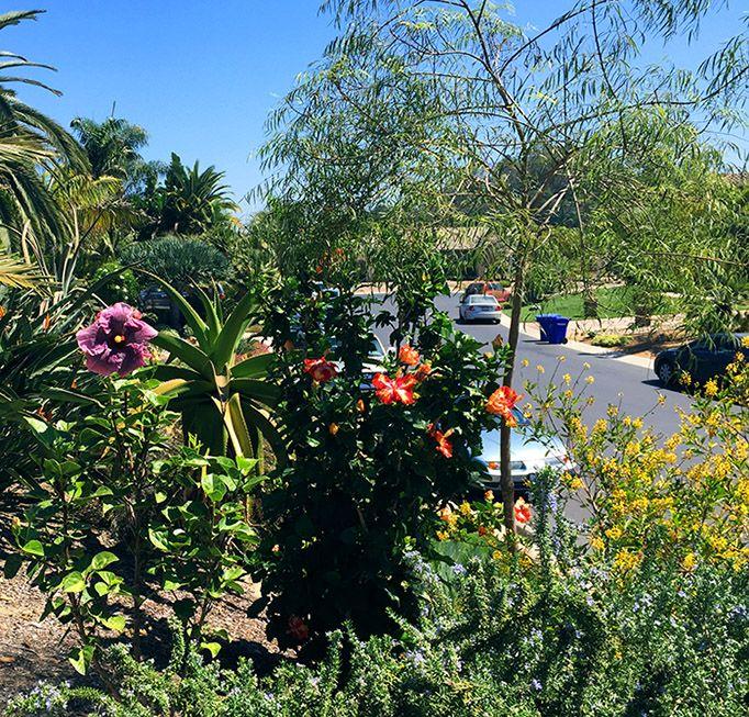 Hidden Valley Hibiscus Worldwide ~ Hibiscus Garden In The Orange County,  California