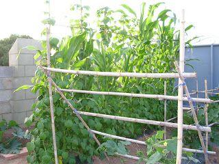 Tierra verde proyecto terraviridis asociaciones Asociaciones de cultivos favorables