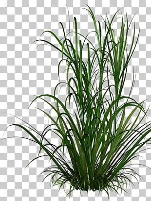 Grasses Grass Green Grass Illustration Png Clipart Flower Png Images Tree Photoshop Flower Backgrounds