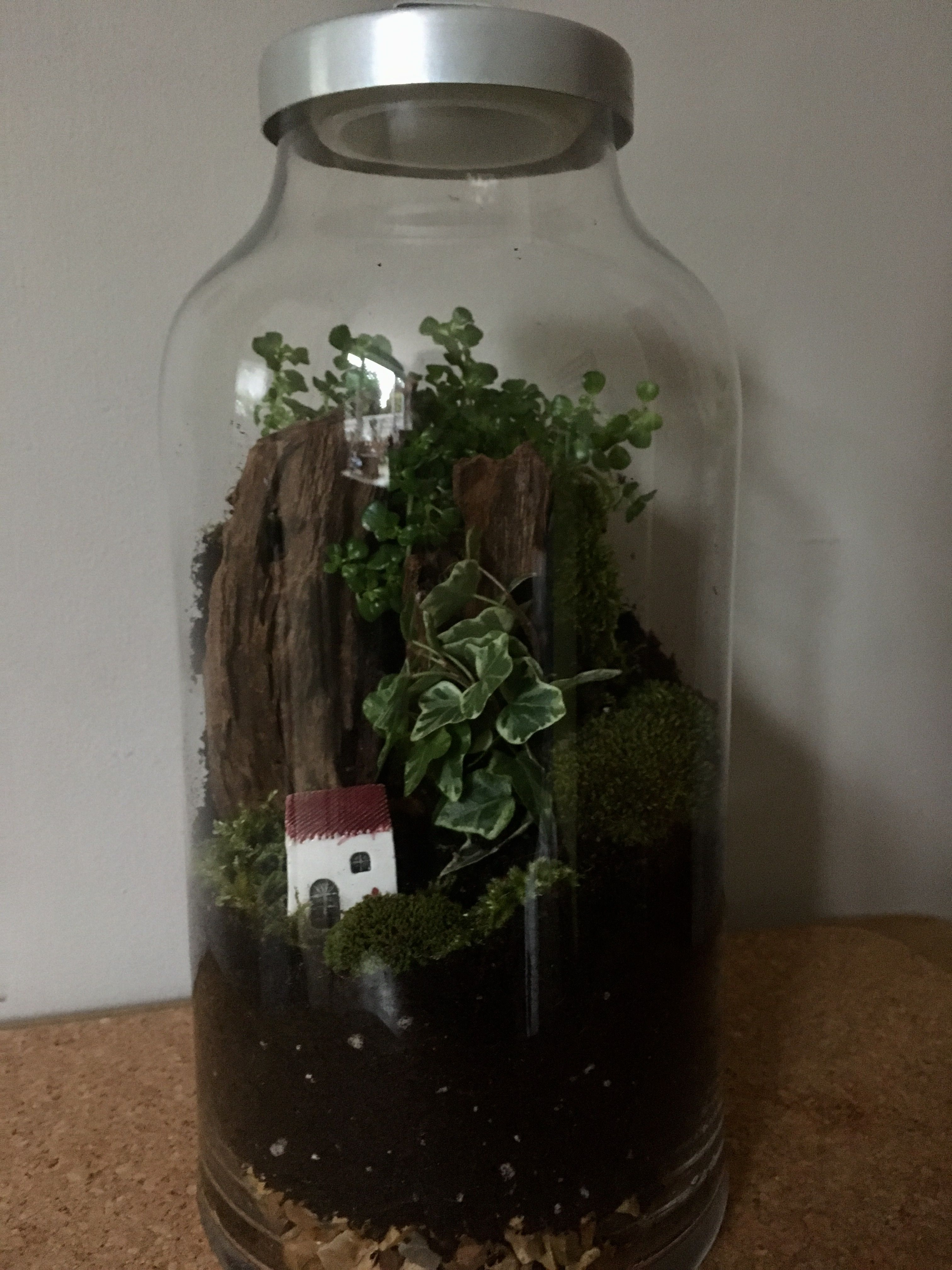 Pin by pat cook on terrariums pinterest terraria and plants