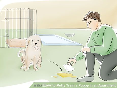 How To Potty Train A Puppy In An Apartment Potty Training Puppy Puppy Training Training Your Puppy