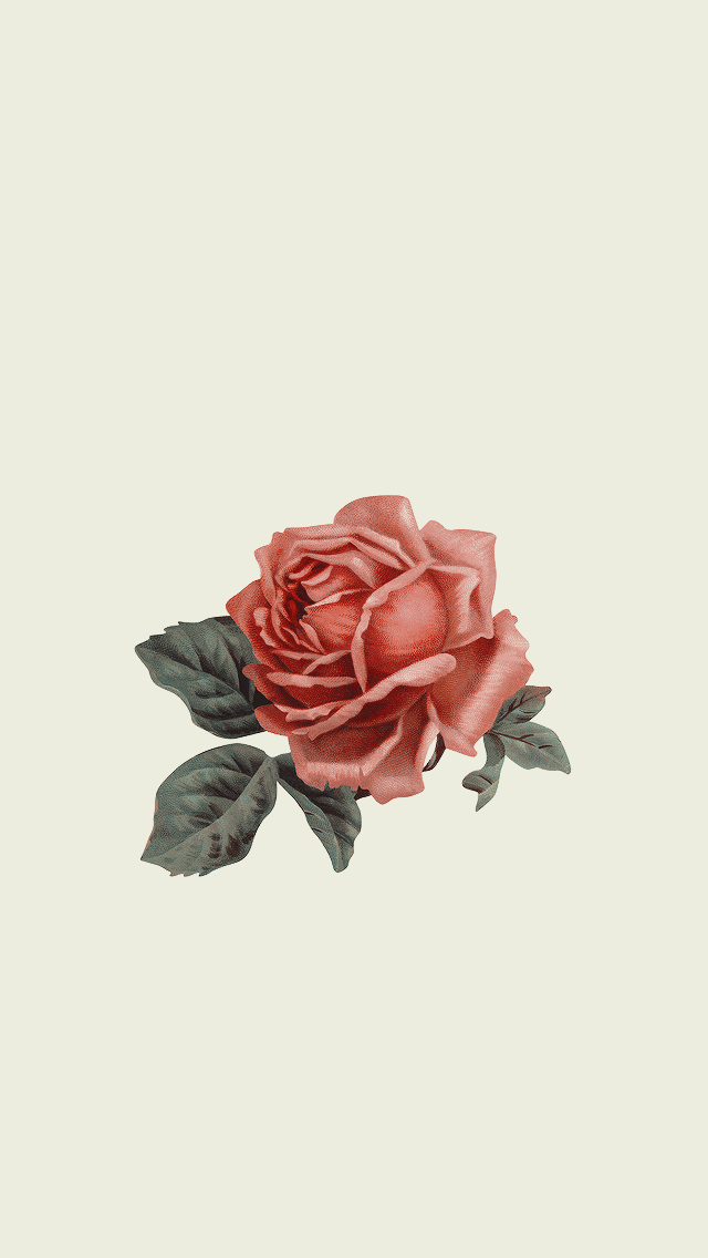 All Is Always Now Flower Phone Wallpaper Minimalist Wallpaper Aesthetic Iphone Wallpaper