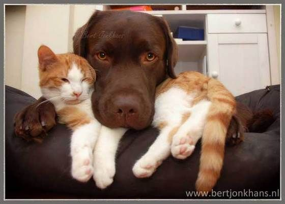 Adorable photos of cat and dog capture their super close friendship » DogHeirs | Where Dogs Are Family « Keywords: cat, friends, best friends, Netherlands