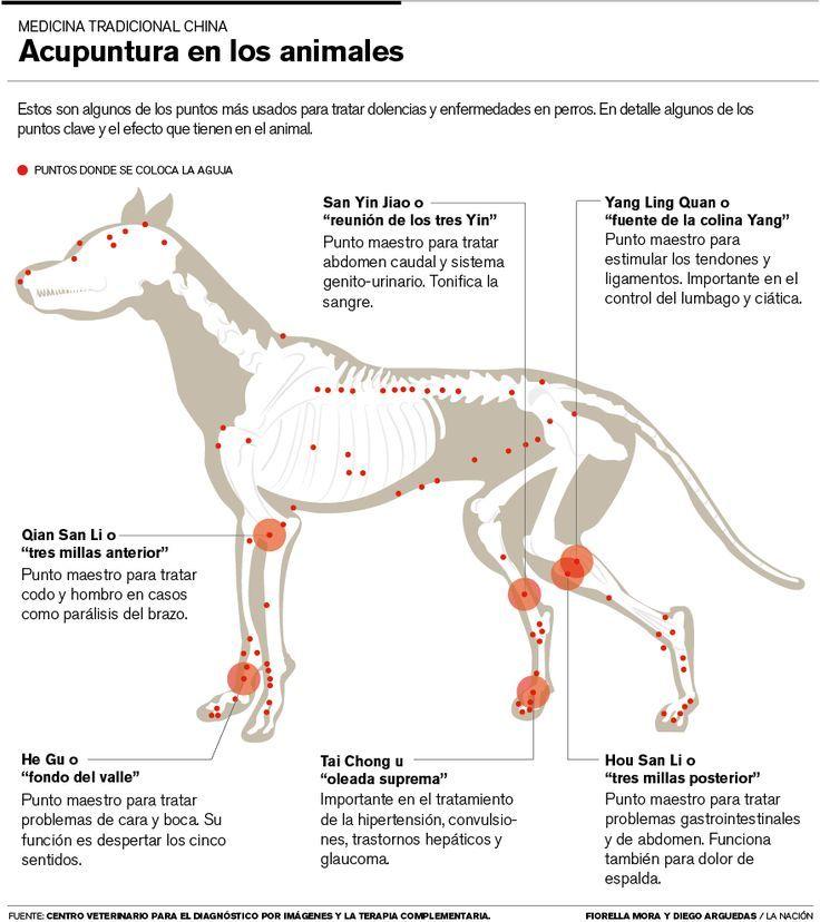 Puntos acupuntura canina: | Acupuntura y reflexologia | Pinterest ...