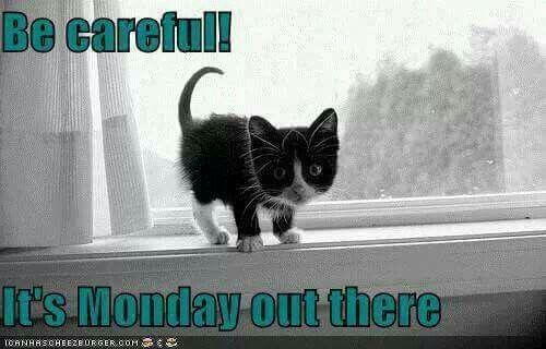 Image result for happy sunday tuxedo cat