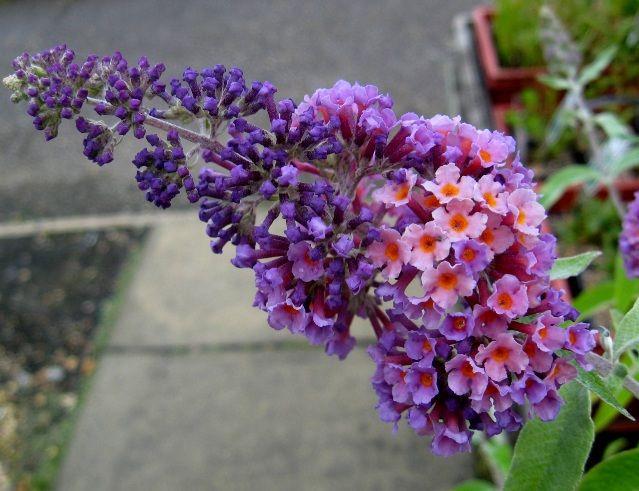 Daftar Nama Bunga Gambar Bunga Cantik Indah Unik Dan Langka Lengkap Dengan Penjelasannya Kumpulan Macam Maca Guia De Jardineria Jardines Poder De La Flor
