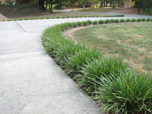 Landscaping ideas with monkey grass liriope monkey for Grass bushes landscaping