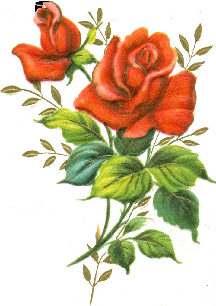 Red Rose Png By Jinifur On Deviantart Red Rose Png Floral Printables Flower Painting