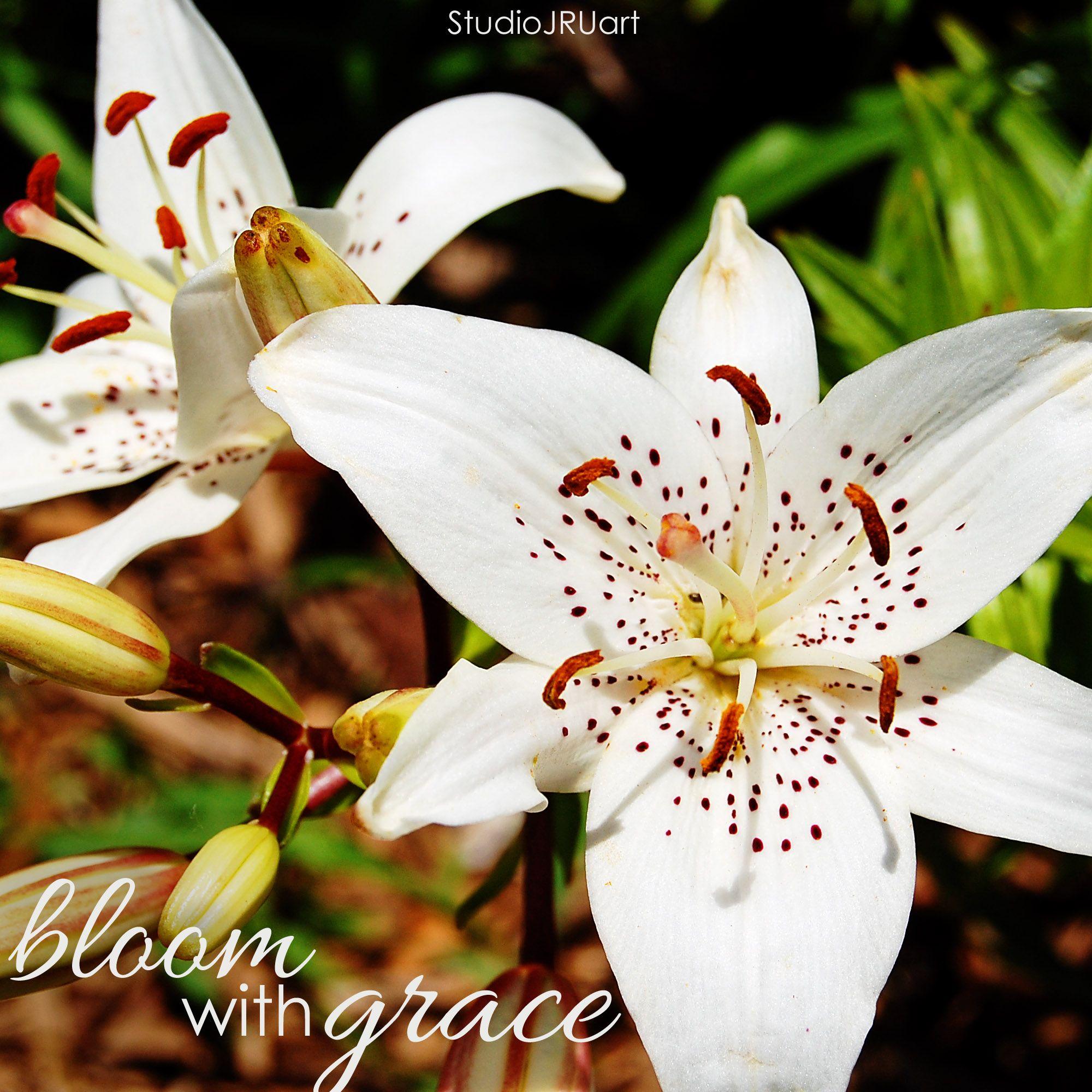 bloom with grace. grace encouragement inspire lilies