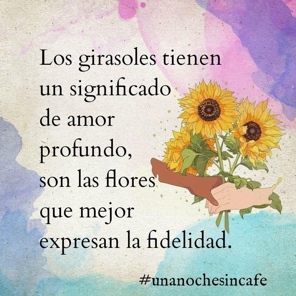 Los Girasoles Tienen Un Significado De Amor Profundo Son Las Flores