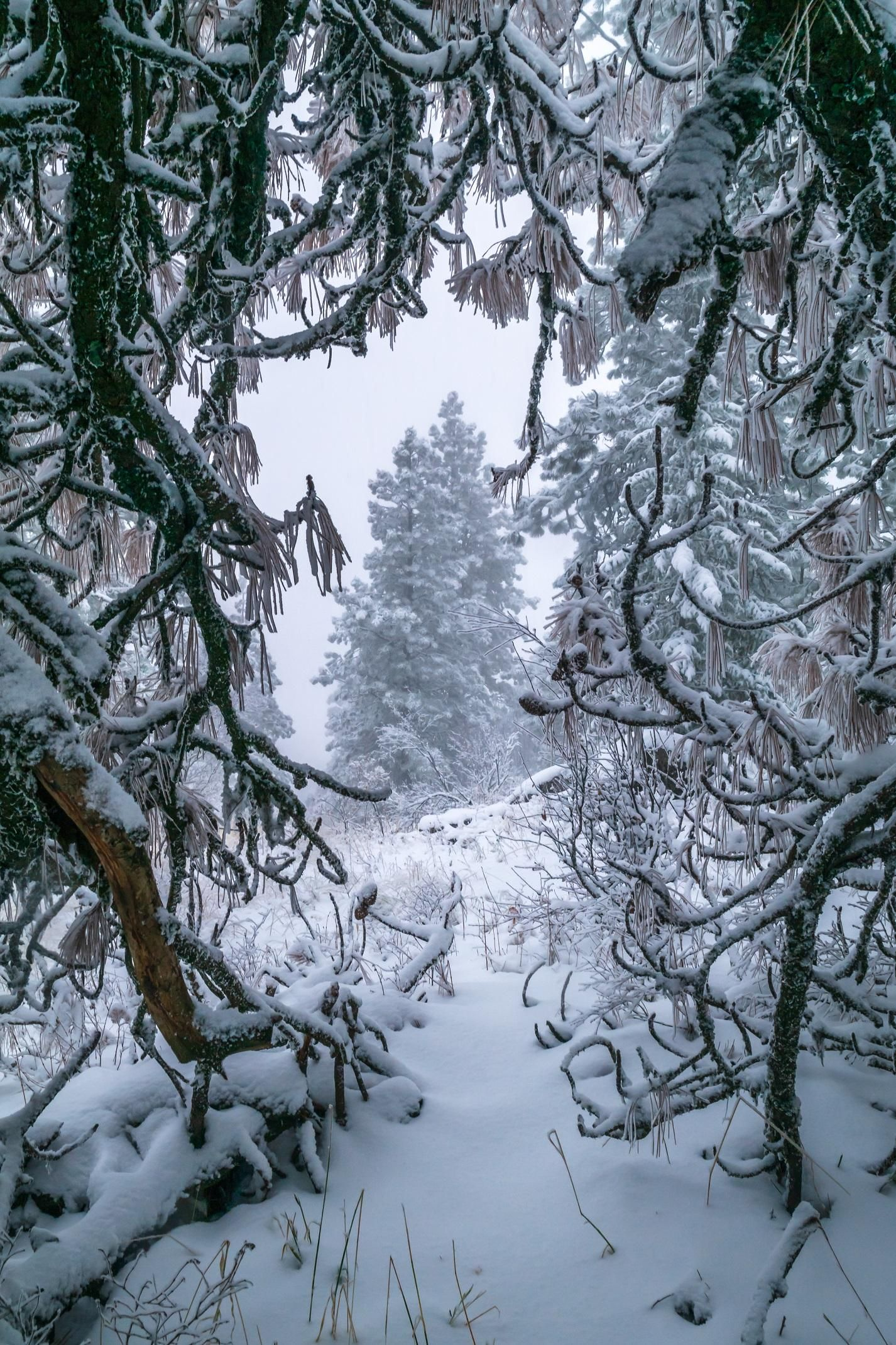 This tree kind of created a snow cave for me, Palouse