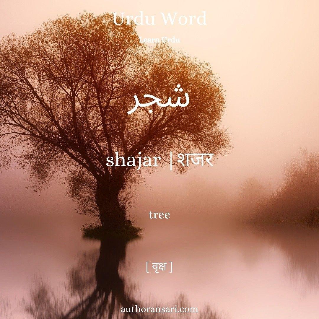 शजर means in 2020 Urdu words, Urdu, Love shayri