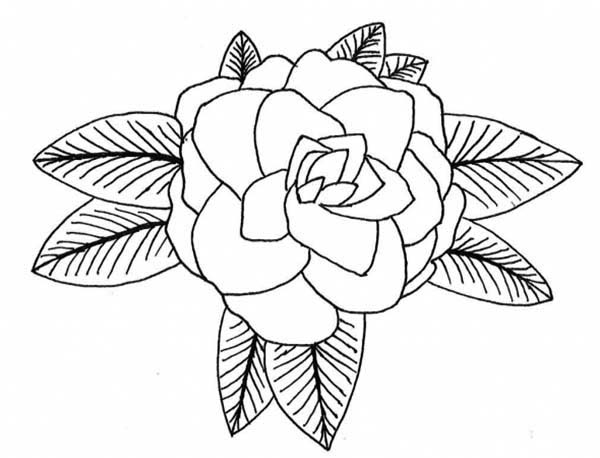 Rose Flower From Top Coloring Page Netart Flower Coloring Pages Coloring Pages Flower Drawing