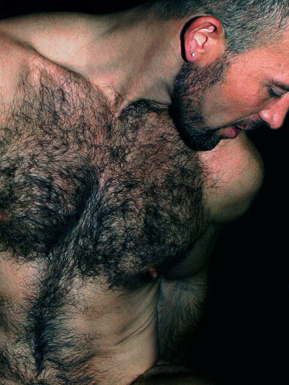 hairy chested bear jpg 1152x768