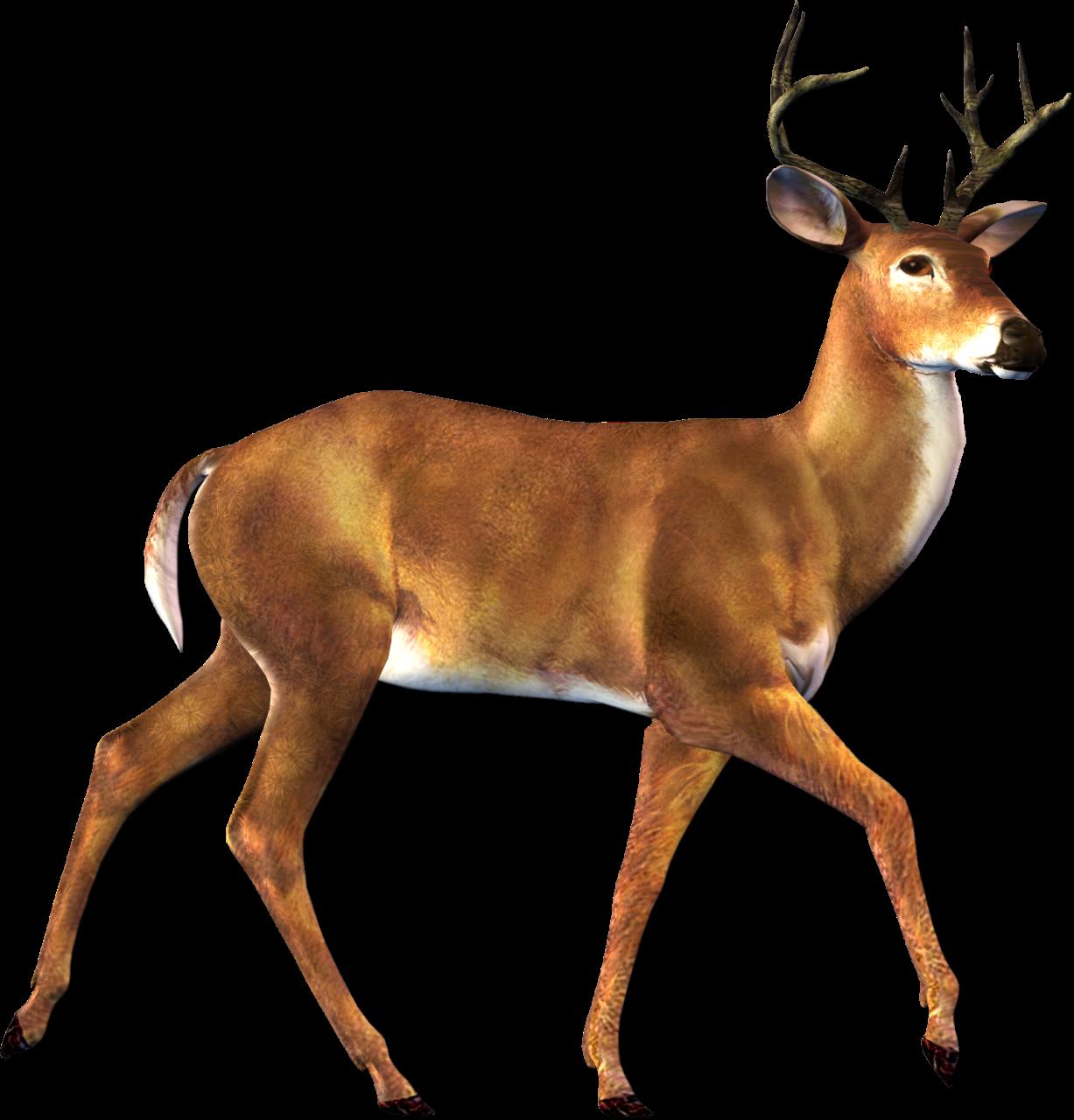 Deer Png Image Deer Art Animals Animals Wild