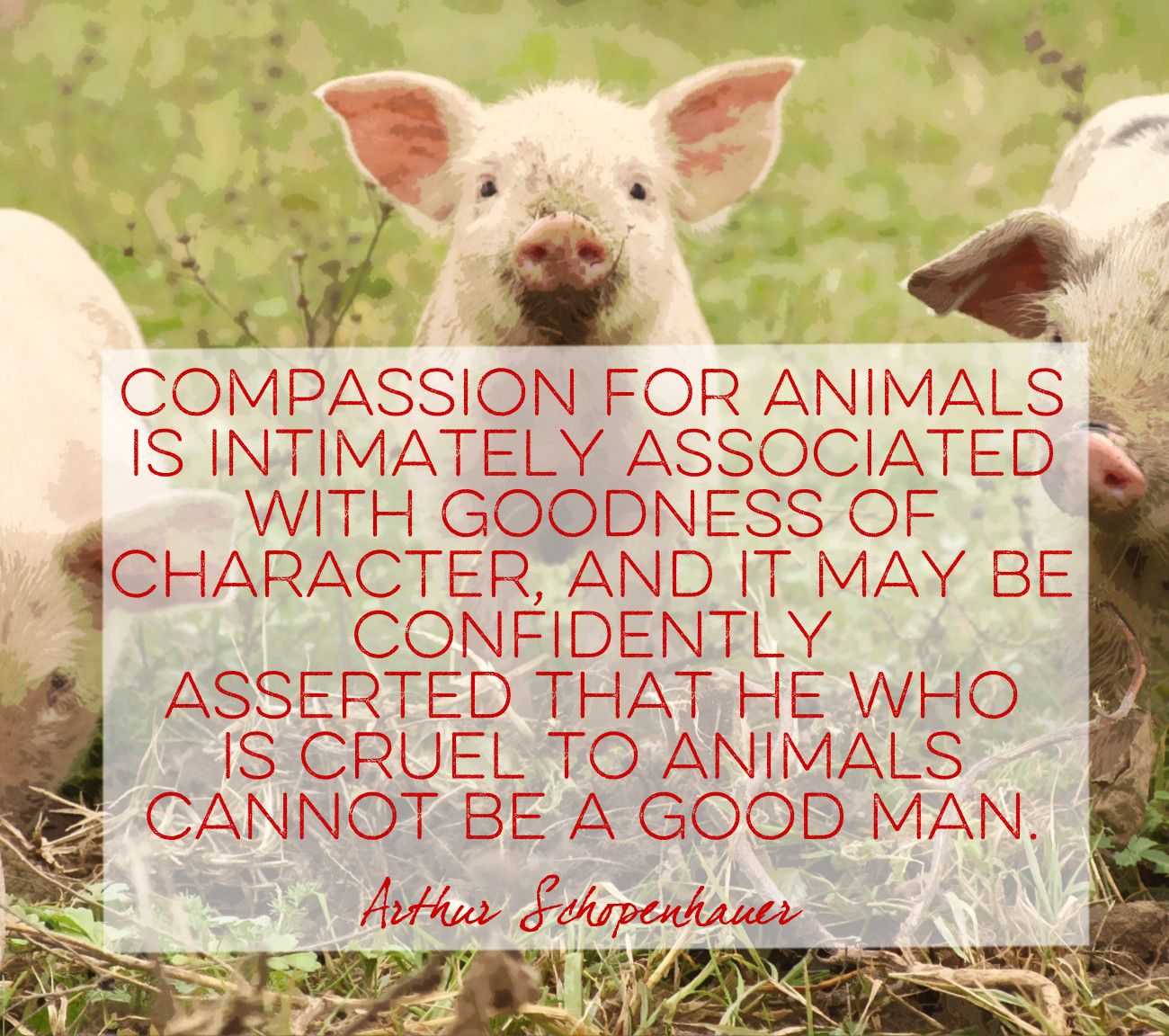 Words by Arthur Schopenhauer - Quotes That Will Melt Every Animal Lover's Heart - Photos