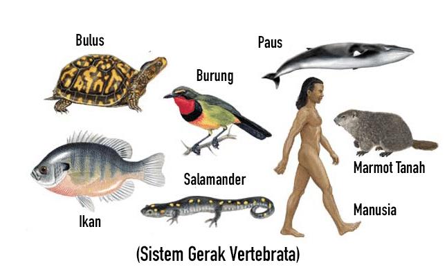 Buatlah Sebuah Gambar Ilustrasi Tentang Organ Gerak Hewan Organ Gerak Manusia Dan Hewan Pengertian Sistem Gerak Pada 2 Http Rep Hewan Ilustrasi Gambar